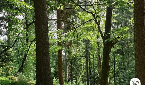 Der Wald ruft: Waldbaden im Strudengau - Waldbaden und Kunst